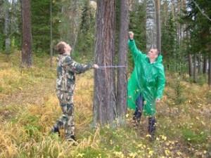 Занятия по отводу и таксации лесосек в полевых условиях