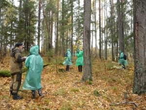 Отвод и таксация лесосек