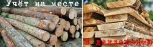 Порядок и правила учета древесины