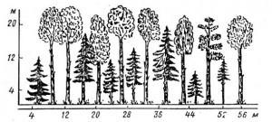 Профиль древостоев со ступенчатой сомкнутостью крон