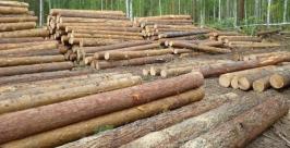 Леса первой категории
